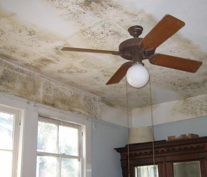 Mold Remediation How to Help Prevent Mold in Your Austin Home