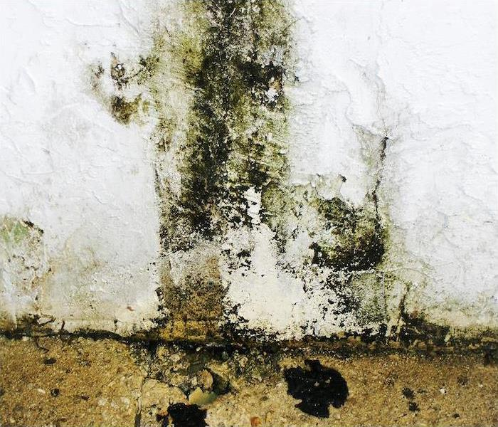 4 Major Health Issues Caused By Mold