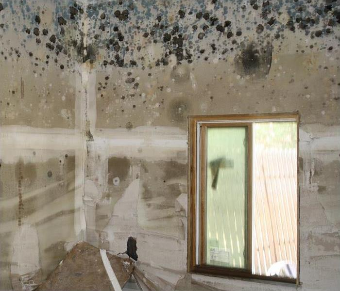 Mold Remediation Three Surprising Causes of Mold in Austin