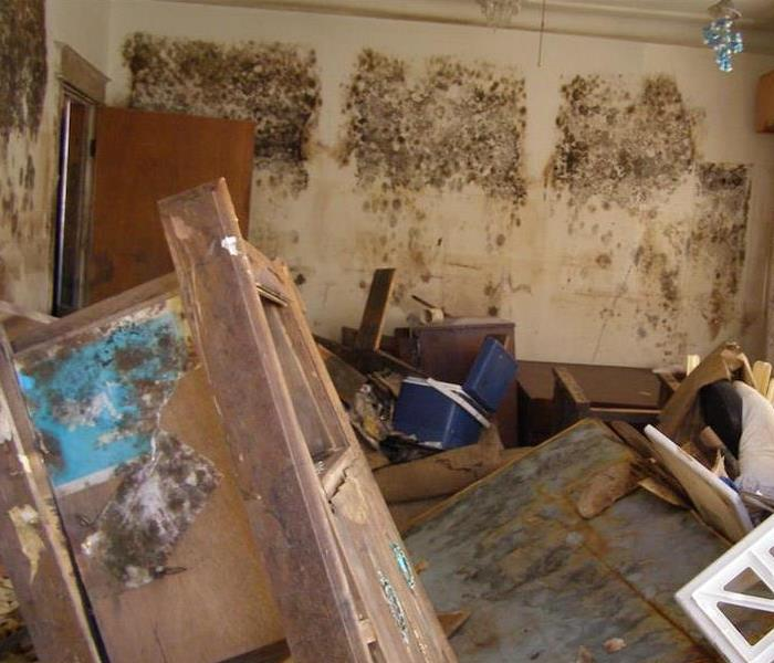 Mold Remediation Saving Your Property After Mold Damage Occurs in Your Austin Home