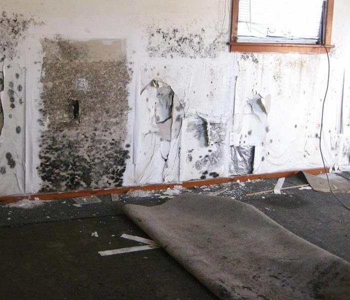 Mold Remediation Mold and Fabric Contamination in Austin: A Dangerous Combination
